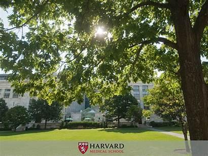 Harvard Desktop Wallpapers University Multimedia Hms Backgrounds