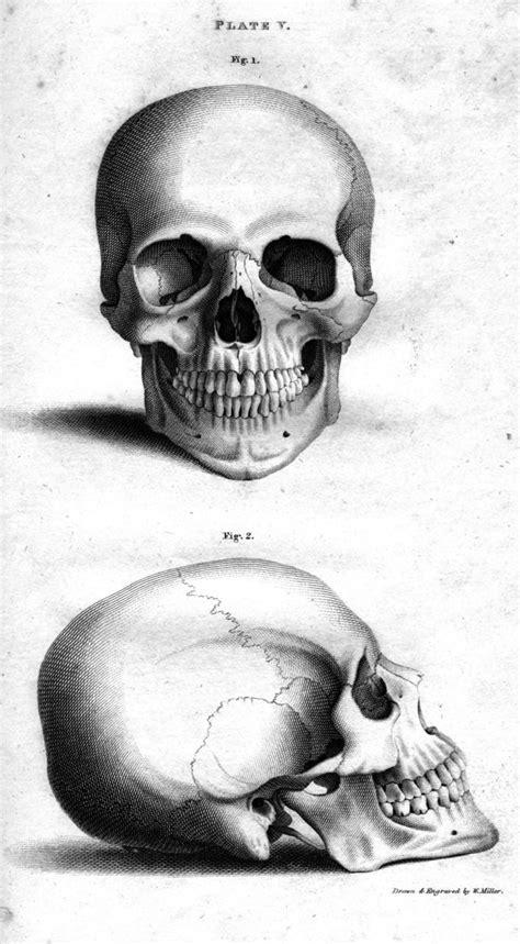 Skull Illustration Halloween Pinterest Drawings