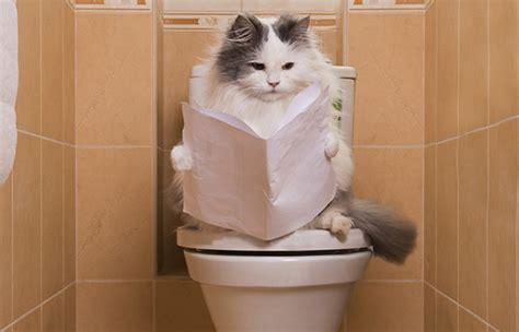 mon chat va souvent au toilette chat aux toilettes 5 astuces pour lui apprendre 224 y aller