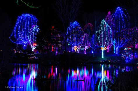 zoo lights 2012 discount tickets