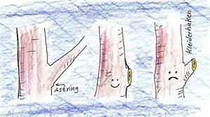 Hohlkehlleisten Auf Gehrung Schneiden Anleitung : obstbaumschnitt einfache tipps f r anf nger klare ~ Lizthompson.info Haus und Dekorationen