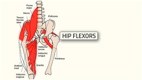 hip joint diagram hip get best free home design idea