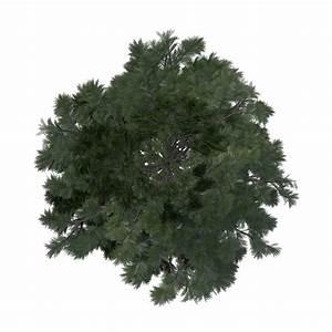 Classic Tree Immediate Entourage Download Full Size ~ loversiq