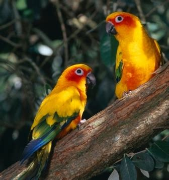 different types of birds that sing different types of small pet birds the pets central