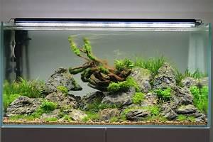 Aquarium Gestaltung Bilder : hilfe bei algen 3 wochen nach einrichtung algen im ~ Lizthompson.info Haus und Dekorationen