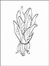 Spinach Coloring Pages Printable Template sketch template
