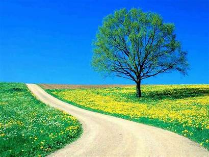 Tree Lonely Wallpapers Backgrounds Tag