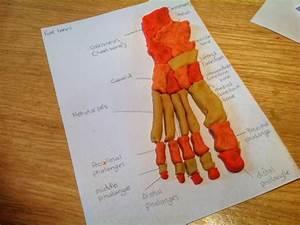 An Ordinary Life   Anatomy  Playdough Feet