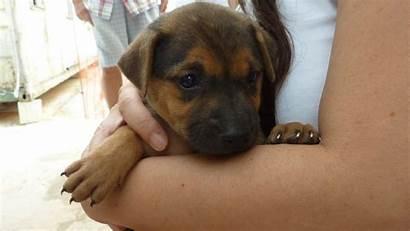 Puppy Mongrel Puppies Petunialee Friendly