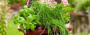 Kräuter Zusammen Pflanzen : kr uter pflanzen kr utergarten im fr hling anlegen ~ Whattoseeinmadrid.com Haus und Dekorationen