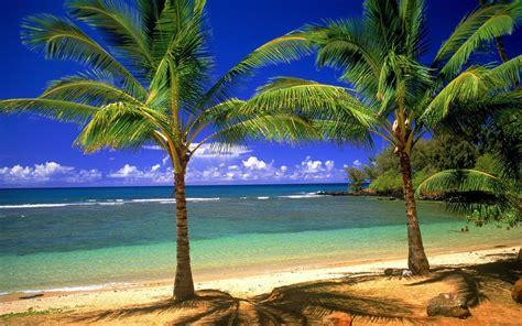 tour pc bureau 6 zomer achtergronden zomer wallpapers strand palmbomen en