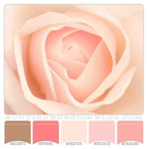 sweet rose petals color scheme with coral pink cream
