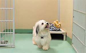 dog boarding the pampered pet resort spacious runs With boarding my dog