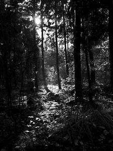 Herbst Schwarz Weiß : schwarz weiss die letzten sonnenstrahlen im herbst foto bild landschaft wald rund um den ~ Orissabook.com Haus und Dekorationen