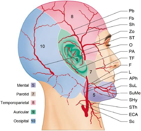 The common carotid artery (a. Arteries of the Face and Neck | Plastic Surgery Key