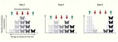 Selection Natural Patterns Adaptation Ls4 Biology