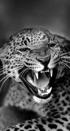 Les 37 meilleures images de Tigers # lyon # tattoo