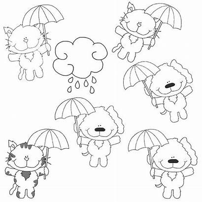 Cats Dogs Raining Cutest Crazy Seen Ever