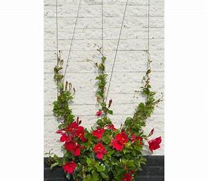 Treillis Pour Plantes Grimpantes : acheter nature ensemble de treillis m tallique pour ~ Premium-room.com Idées de Décoration