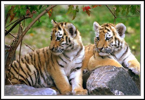 Amazing Wildlife India Tour Tourism in India India