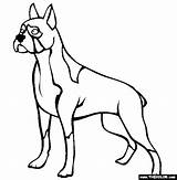 Boxer Coloring Printable Chien Dessin Coloriage Dog Dogs Imprimer Chiffre Educational Numbers Adult Bestof Galerie Sheets Thecolor sketch template