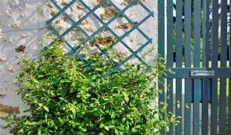 treillis pour plante grimpante quelles plantes grimpantes pour orner un treillis entretenez et embellissez votre jardin