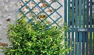 Plantes Grimpantes Mur : quelles plantes grimpantes pour orner un treillis ~ Melissatoandfro.com Idées de Décoration