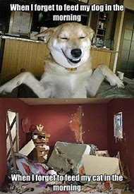 Funny Cats and Dogs Animals