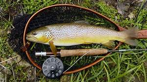 1920x1080 Fly Fishing, Trout, Brown Trout Fly Fishing ...