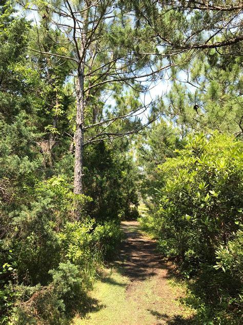 Hammock Trails by Hammock Nature Trail Carolina Alltrails