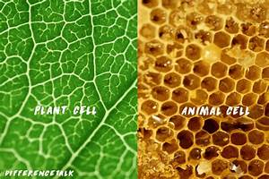 Plant Cell Vs Animal Cell Microscope
