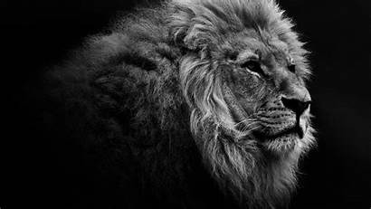 Desktop Lion 1440 2560