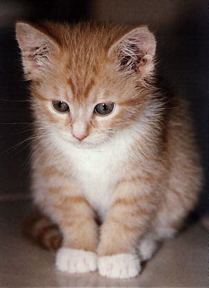 stokin menangis  kucing  skizo