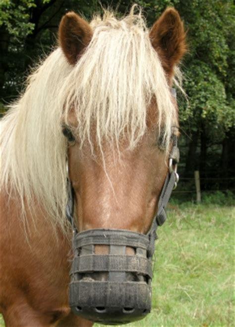 Fressbremse Pferd Erfahrungen