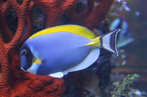 beaux poissons exotiques album photos les chignons et la nature dans tous ces 233 tats