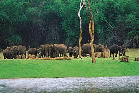 kerala thekkady periyar wildlife sanctuary india places visit sightseeing