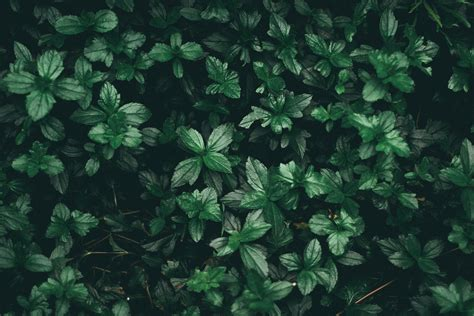 Aesthetic Olive Green Wallpaper Iphone by Olive Greenaesthetic Desktop Wallpapers Top Free Olive
