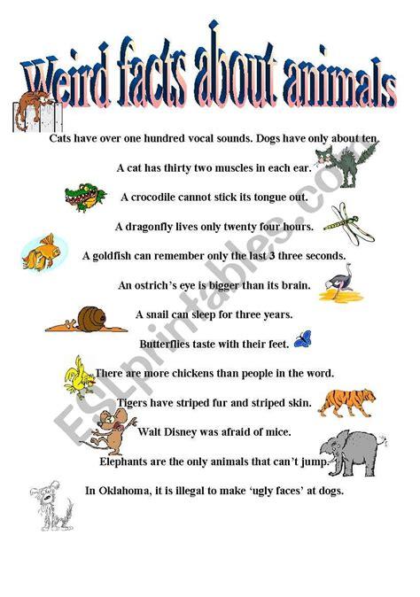 weird facts  animals esl worksheet  catherine shutik