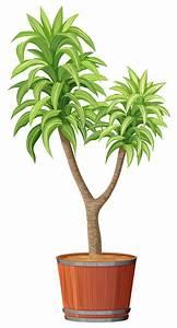 Baum Im Topf : ein baum der im topf pflanzt download der kostenlosen vektor ~ A.2002-acura-tl-radio.info Haus und Dekorationen