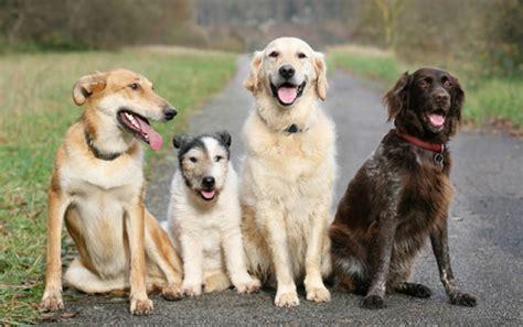 welchen geruch mö hunde nicht hunde riechen etwa 40x besser als menschen wieso aber stecken sie dann die nase immer 252 berall