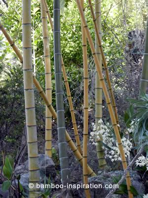 bamboo garden plants products  bamboo structures