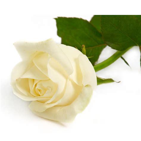 Makna Bunga Mawar dalam Lirik Lagu Gambar Hidup