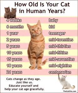 cat years compared to humans 25 best ideas about cats on kitty cats