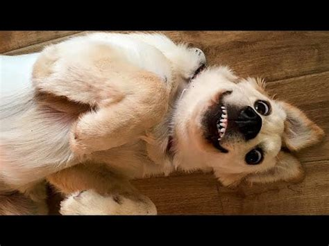 Funny Dog Photoes