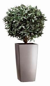 Plante D Extérieur En Pot : location de plantes ~ Teatrodelosmanantiales.com Idées de Décoration