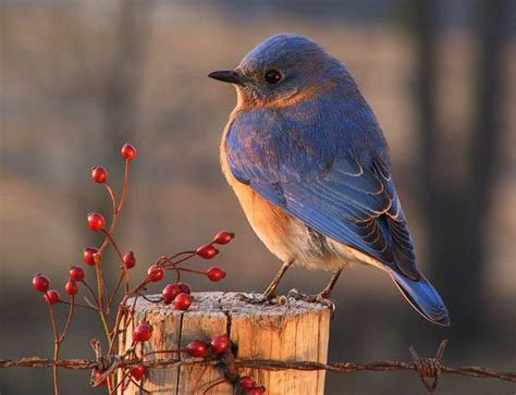 vineyard nature and birds on pinterest