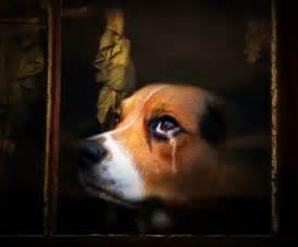 Sad Puppy Dog Crying