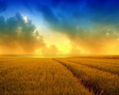 Wallpapers Harvest Wheat Field Backgrounds Desktop Golden
