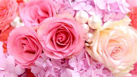 壁紙 ピンクのバラの背景 2560x1600 Hd 無料のデスクトップの背景