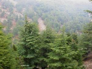 Cedars of Lebanon Page 5